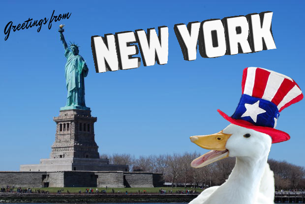 A Duck in New York